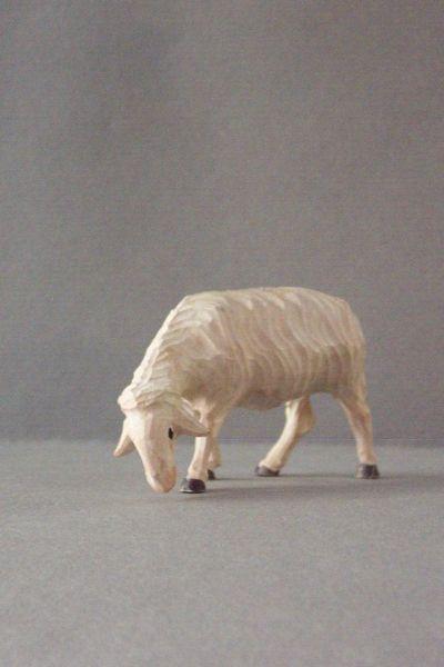 Schaf aesend Weymouthskiefer lasiert