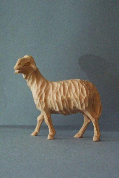 Schaf stehend Weymouthskiefer