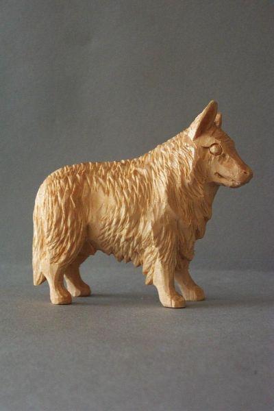 Hirtenhund, Weymouthskiefer natur