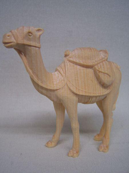 Kamel Weymouthskiefer natur