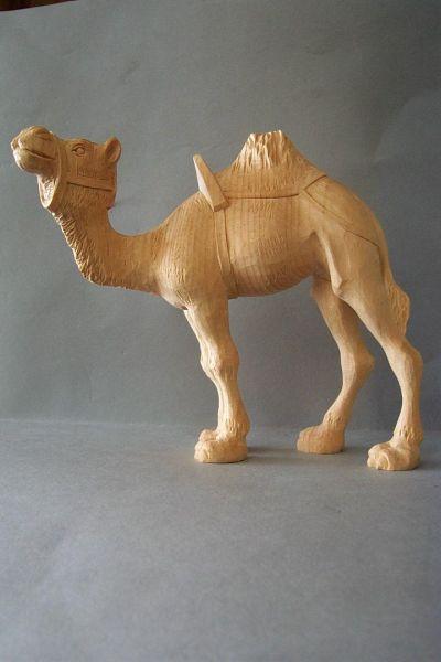 Kamel 1 stehend, Weymouthskiefer natur