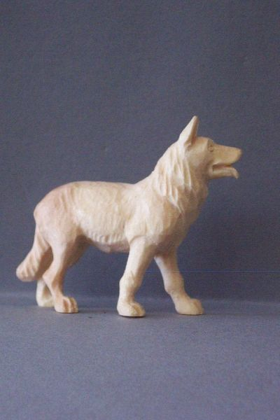 Hund Weymouthskeifer natur