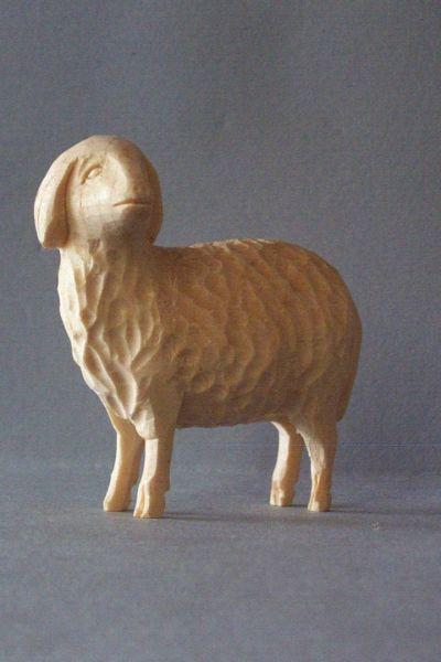 Schaf 1 stehend, Weymouthskiefer natur