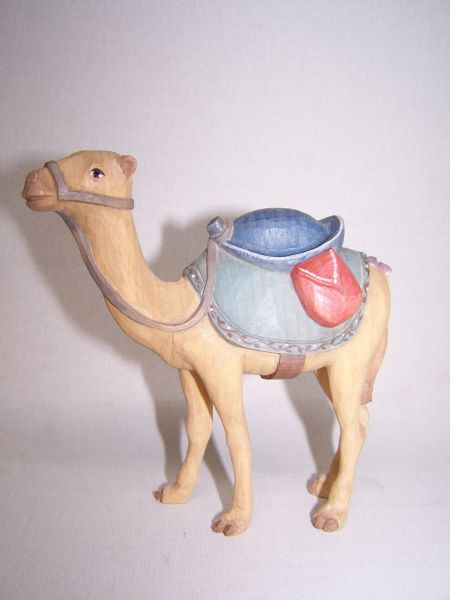 Kamel lasiert